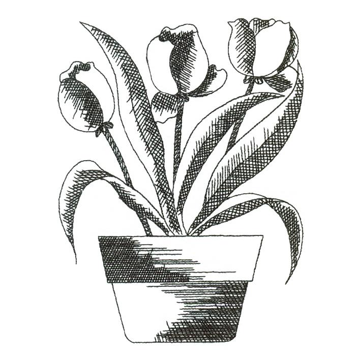 black tulip sketch m magic stock art